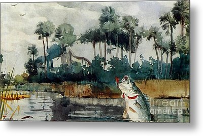 Black Bass Florida Metal Print by Pg Reproductions