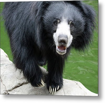 Sun Bear Metal Print by Inspirational Photo Creations Audrey Woods