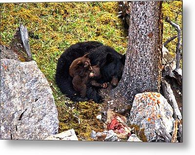 Black Bear Family Nap Metal Print by Adam Jewell