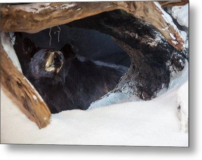 Metal Print featuring the digital art Black Bear In Its Winter Den by Chris Flees