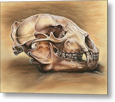 Black Bear Skull Metal Print
