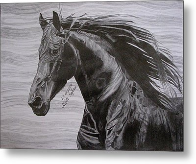 Black Beauty Metal Print by Melita Safran