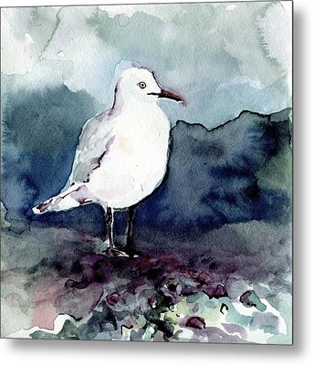 Black-billed Gull Metal Print