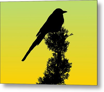 Black-billed Magpie Silhouette - Special Request Background Metal Print