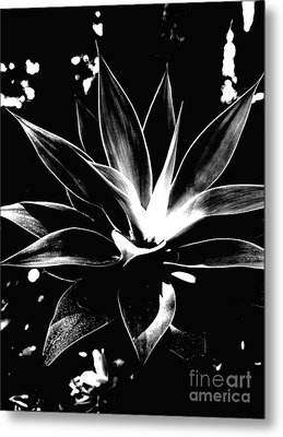 Metal Print featuring the photograph Black Cactus  by Rebecca Harman