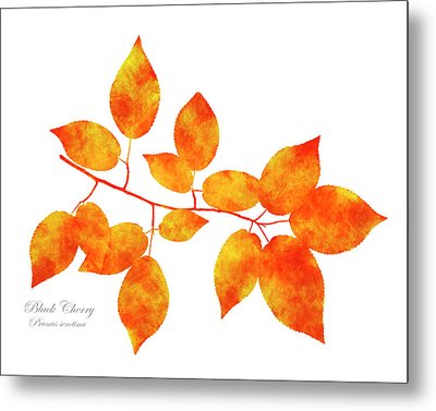 Black Cherry Pressed Leaf Art Metal Print by Christina Rollo