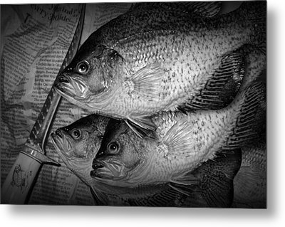 Black Crappie Panfish With Fish Filet Knife In Black And White Metal Print