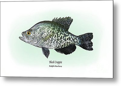 Black Crappie Metal Print by Ralph Martens