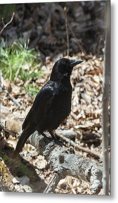 Black Crow In The Forest Metal Print by John Haldane