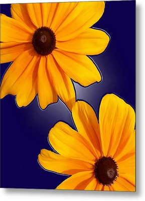 Black-eyed Susans On Blue Metal Print