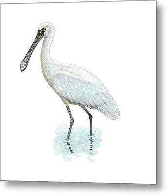 Black-faced Spoonbill Metal Print by Lionel Portier