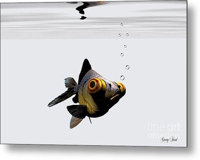 Black Goldfish Metal Print by Corey Ford