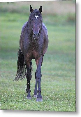 Black Horse Metal Print by Glenn Vidal