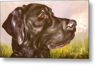 Black Lab In The Field Metal Print by Susan A Becker