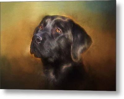 Black Lab Portrait 2 Metal Print