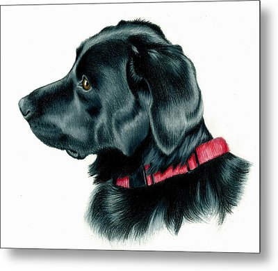 Black Lab With Red Collar Metal Print by Heather Mitchell