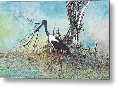 Black Neck Stork  Metal Print by Manjot Singh Sachdeva