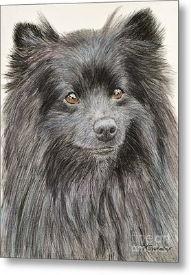 Black Pomeranian Painting Metal Print