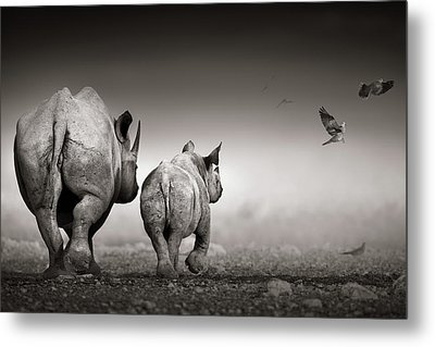 Black Rhino Cow With Calf  Metal Print