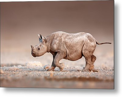 Black Rhinoceros Baby Running Metal Print