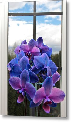 Blue Metal Print featuring the photograph Black Sapphire Orchids  by Aaron Berg