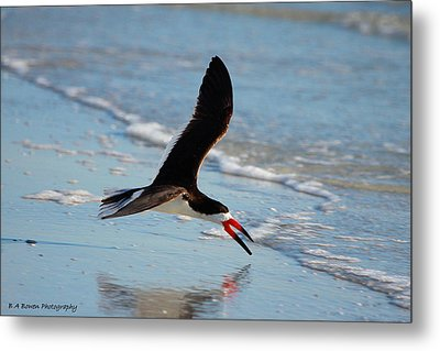 Black Skimmer Metal Print by Barbara Bowen