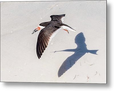 Black Skimmer, Fish And Shadow Metal Print