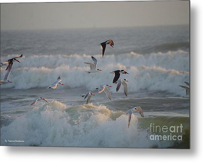 Black Skimmers And Gulls Metal Print