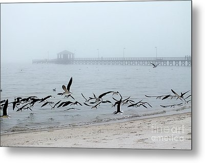 Black Skimmers - Biloxi Mississippi Metal Print by Scott Cameron
