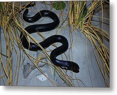 Black Snake Metal Print by Cynthia Guinn
