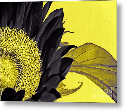 Black Sunflower Metal Print