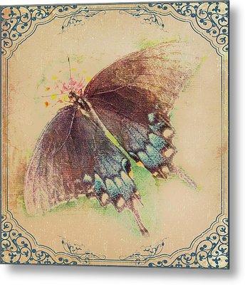 Black Swallowtail Butterfly Framed  Metal Print