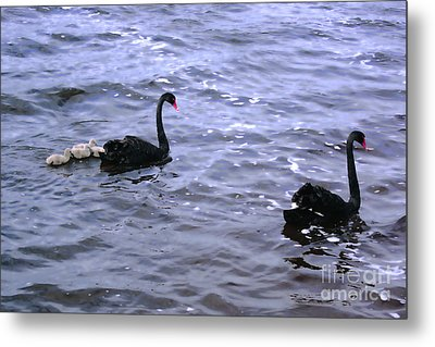 Black Swan Family Metal Print