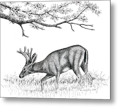 Black Tail In Velvet Metal Print