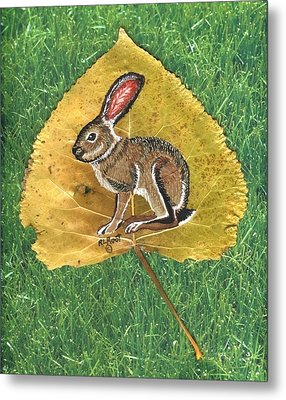 Black Tail Jack Rabbit  Metal Print by Ralph Root
