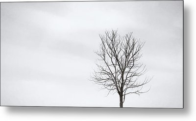 Black Tree White Sky Metal Print by Scott Norris