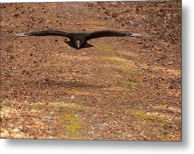Metal Print featuring the digital art Black Vulture In Flight by Chris Flees