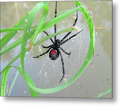 Black Widow Wheel Metal Print by Al Powell Photography USA