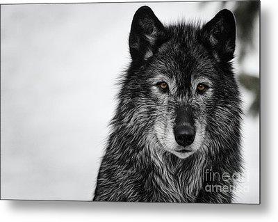 Black Wolf I Metal Print