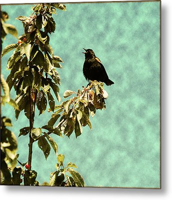 Blackbird's Song Metal Print by Bonnie Bruno