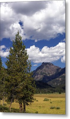 Blacktail Plateau Vertical Metal Print by Marty Koch