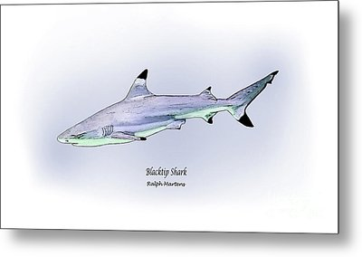 Blacktip Shark Metal Print by Ralph Martens