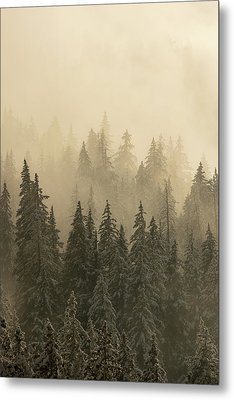 Metal Print featuring the photograph Blanket Of Back-lit Fog by Dustin LeFevre