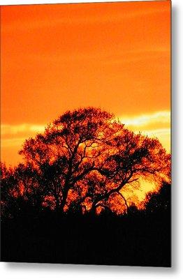 Blazing Oak Tree Metal Print by Karen Wiles