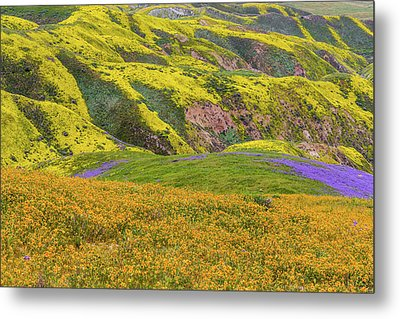 Metal Print featuring the photograph Blazing Star On Temblor Range by Marc Crumpler