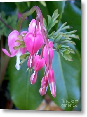 Bleeding Heart Metal Print by Vera Gadman