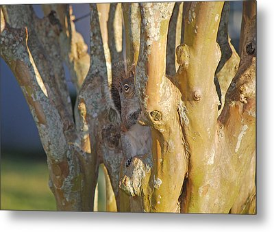 Blending In Metal Print by Adele Moscaritolo