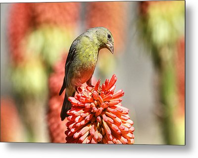 Blending In Metal Print by Donna Kennedy