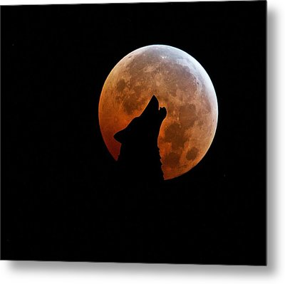 Blood Full Moon And The Wolf Metal Print by Marianna Mills