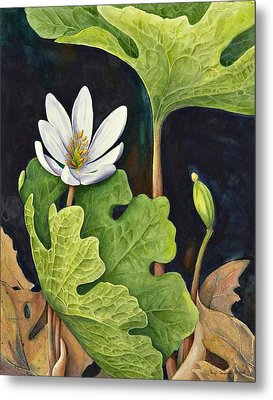 Bloodroot Metal Print by Margit Sampogna